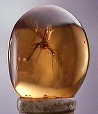 Christmas Pictures on The Picture Shows An Insect Which Became Trapped In Amber